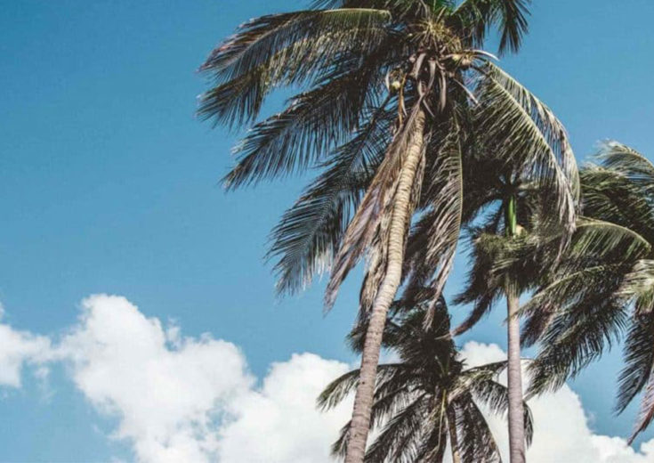 palm trees swaying in the breeze